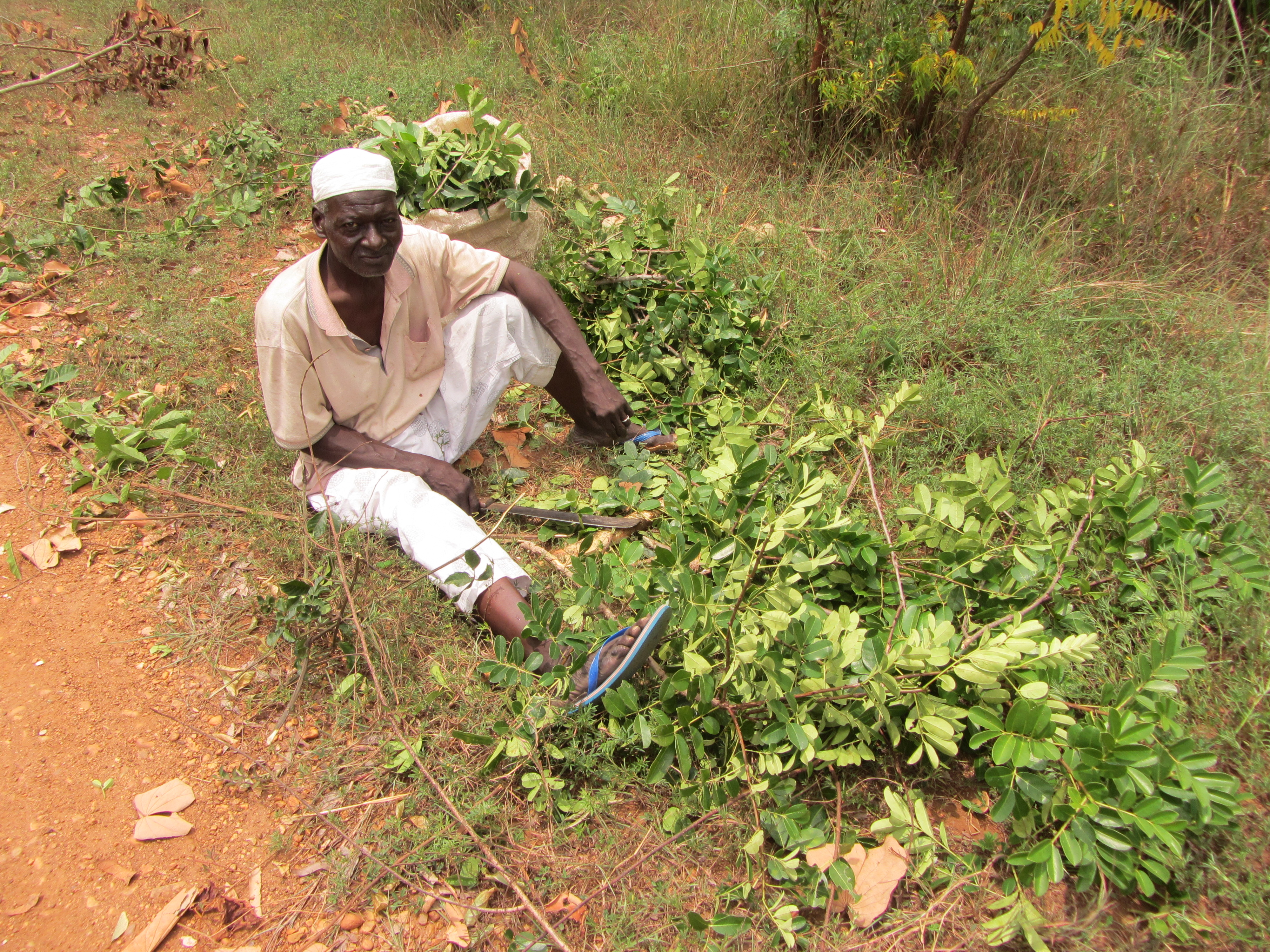 Un experto recoge hojas para combatir el paludismo