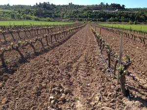 Les vinyes comencen a arrenglerar