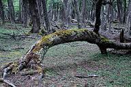 Imagen de un árbol caído