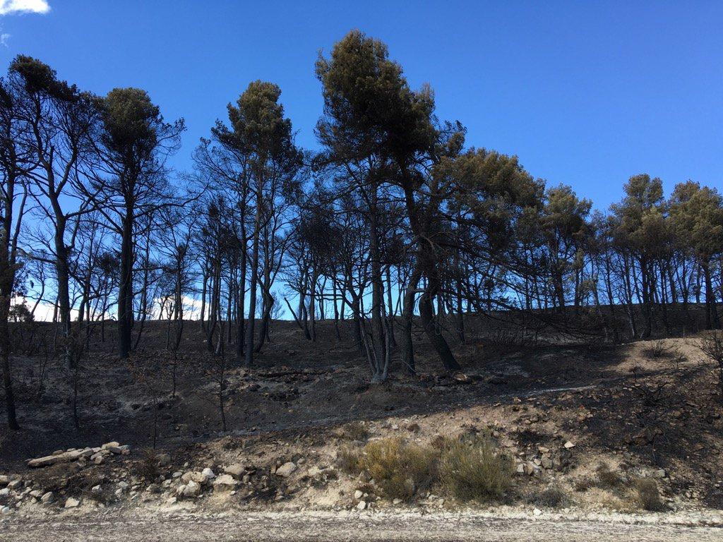 Paisatge després del devastador incendi