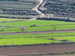 Estampa de sembrats, ametllers i olivers en migdia de ple hivern, clar i solejat.