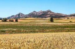 Silenciosos y solitarios campos de Soria en tiempos de siega